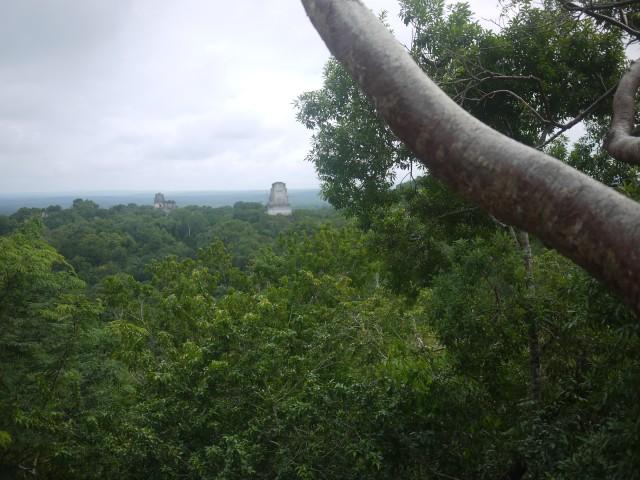 Mayan temples poking through the trees, Tikal